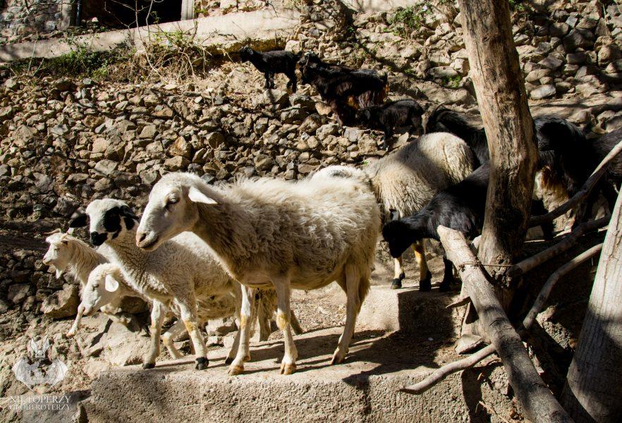 Berberowie i Atlas Wysoki (18)