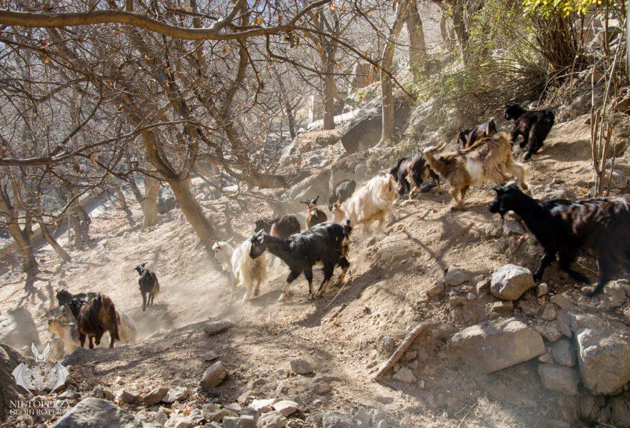 Berberowie i Atlas Wysoki (19)
